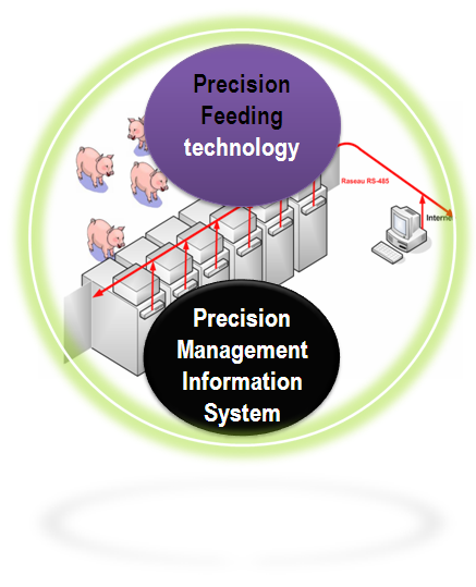Web Site Map: Precision Feeding In Pigs